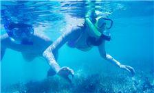 太平洋海岛俱乐部设施 - 浮潜